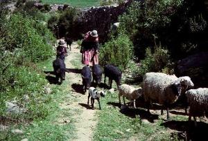 pastoralsociety